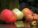 faule Äpfel_1